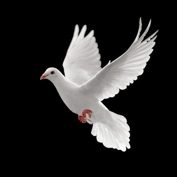Dove-548_l_e26c168d9dc59999