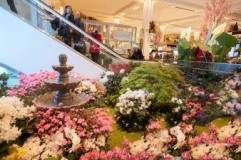 20150401-macys-flower-show-petrsvab-9684-676x450